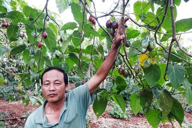 Ông Nguyễn Mạnh Hà, Giám đốc HTX Nông nghiệp Magic S Rạng Đông, đang đứng trước nỗi lo không tìm được đầu ra cho sản phẩm