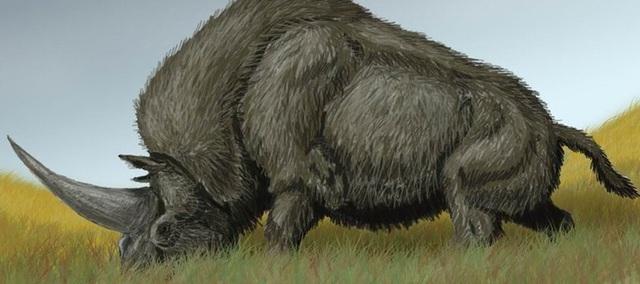Hình ảnh mô tả được cho là loài kỳ lân Siberia.