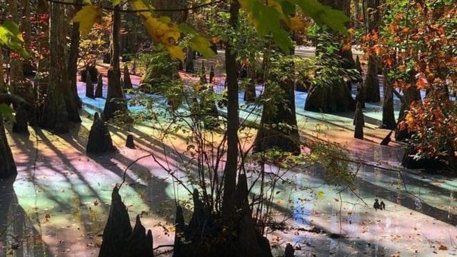 Đầm lầy trong một công viên ở Mỹ có màu của 7 sắc cầu vồng