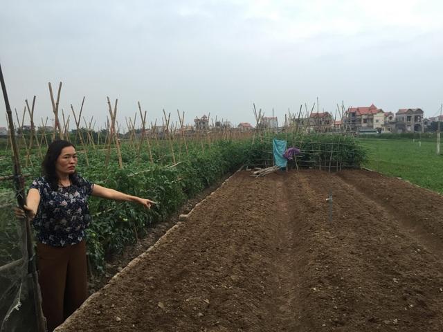 Một trong số 6 mảnh đất ruộng mà bà Bình bị lừa mua phải (Ảnh: Nguyễn Trường).