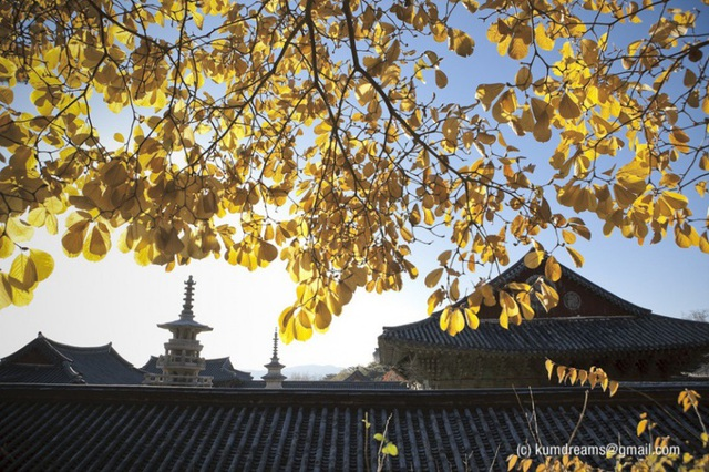 Đây là ngôi đền tiêu biểu của Phật giáo Hàn Quốc. Ngôi đền cổ kính được biết đến như một bông hoa rực rỡ của văn hóa Phật giáo. Bulguksa lưu giữ nhiều di sản văn hóa quốc gia (Bảo vật Quốc gia) và di sản văn hóa quý giá chứa đựng tâm hồn nghệ thuật tinh tế của con người thời Silla như Daeungjeon (chính điện), Geukrakjeon, Dabotap, Seokgatap,…
