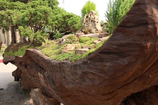 """Tác phẩm """"Kỳ sơn mộc thạch"""" là một rừng tùng bonsai được anh Thịnh trồng trên phần thân cây Sao cổ thụ. Để cây sinh trưởng và phát triển tốt, bên trong thân cây anh Thịnh lót một lớp đất ẩm, phía bên trên trải thảm cỏ trang trí."""