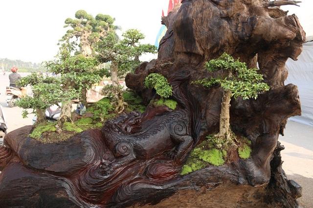 """Vị trí trồng các cây bonsai được anh Thịnh tính toán, cân nhắc cẩn thận. Đây là loài hoa được mệnh danh là một trong những """"thập đại danh hoa"""" nổi tiếng đẹp bậc nhất. Hoa nhất chi mai nở vào mùa xuân, thường được gọi là mai trắng, khi bung nở chúng có màu trắng muốt, cánh đều xếp chồng nhau."""