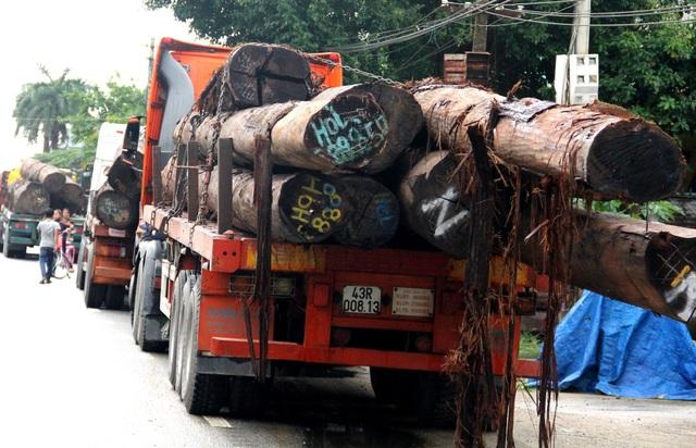 Tạm giữ 4 xe container chở hàng chục cây gỗ khủng trên QL1 - 1