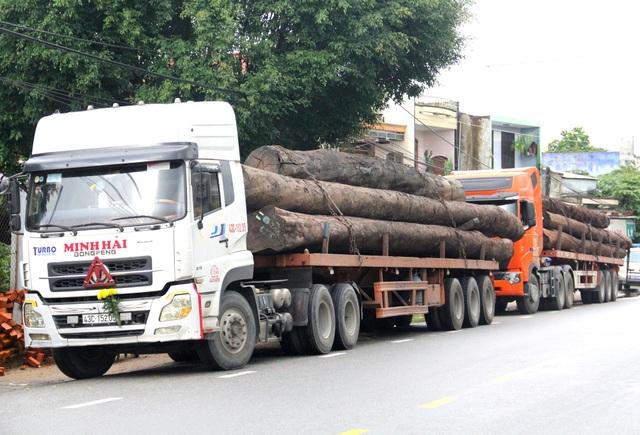 Các xe container chở gỗ khủng bị tạm giữ