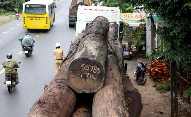 Lực lượng chức năng tạm giữ các xe container chở gỗ khủng để điều tra