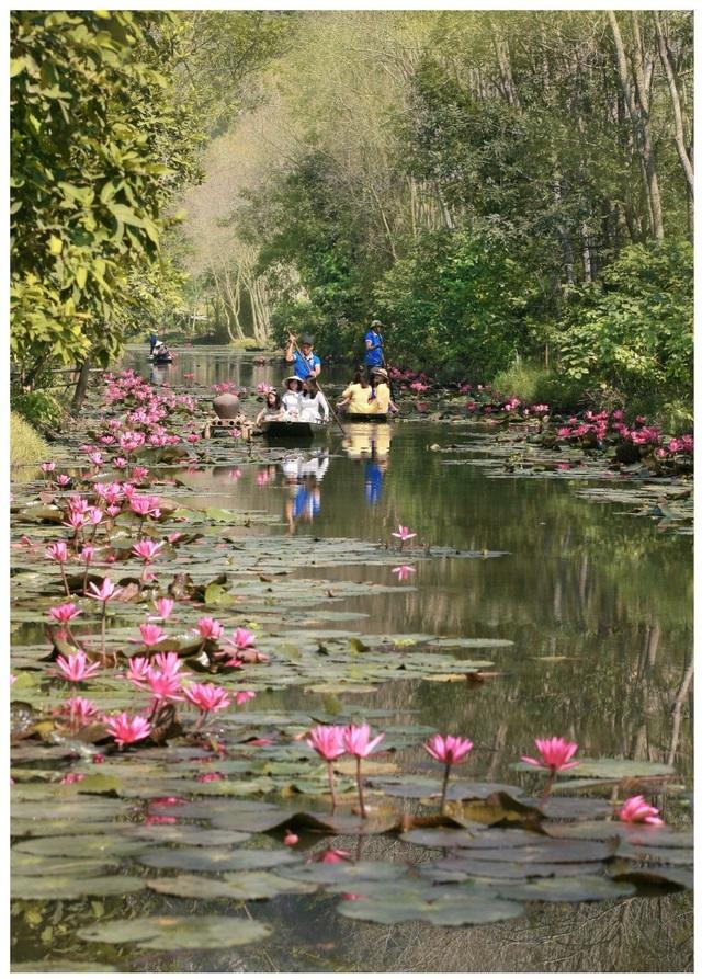 Mùa này 2 dòng suối biến thành dòng suối hoa rực rỡ