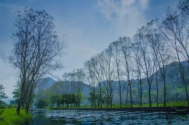 Hàng cây đang mùa thay lá, tạo nên vẻ đẹp vô cùng lãng mạn, bay bổng.