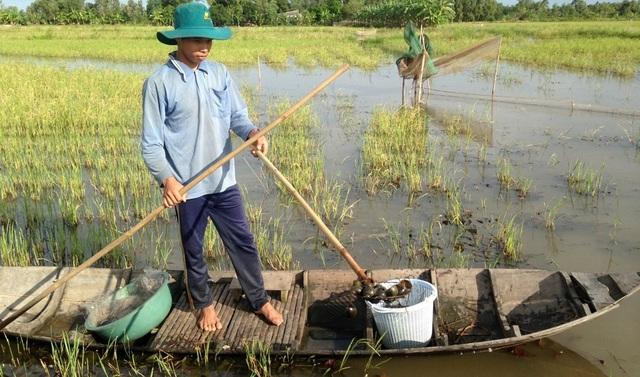 Mùa lũ miền tây bắt đầu từ tháng 7 kéo dài đến hết tháng 11 hàng năm. Khi đó, các cánh đồng trồng lúa (chủ yếu khu vực ngoài đê bao) nước ngập trắng đồng, cá, tôm, cua, ốc… nhiều vô số kể.