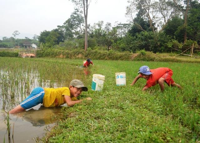 Mặc dù thời tiết giá lạnh nhưng hàng ngày các em học sinh miền núi ở huyện Yên Thành (Nghệ An) vẫn dầm nước để bắt cua đồng.