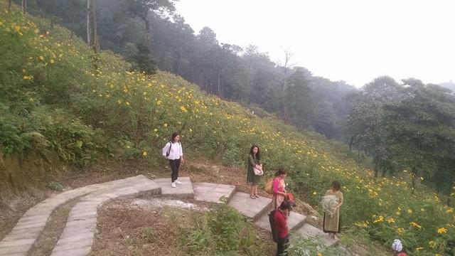 Theo ghi nhận hoa dã quỳ mới chỉ chớm nở, lác đác tại một số điểm. Ảnh: Facebook