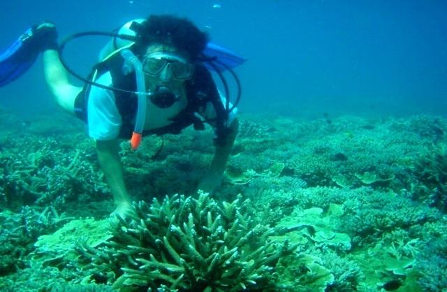 Du khách ngắm san hô ở biển Cù Lao Chàm. Tỉnh Quảng Nam đưa ra quy chế để siết chặt du lịch, đảm vệ tài nguyên biển nhằm khai thác lâu dài ở Cù Lao Chàm
