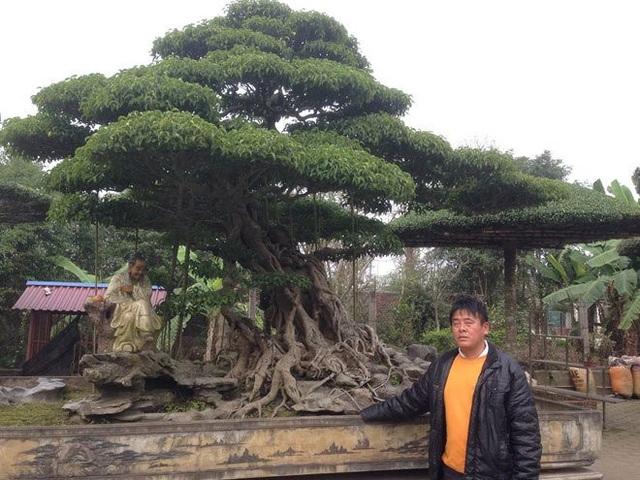 Những siêu cây của làng nghề Vỵ Khê.