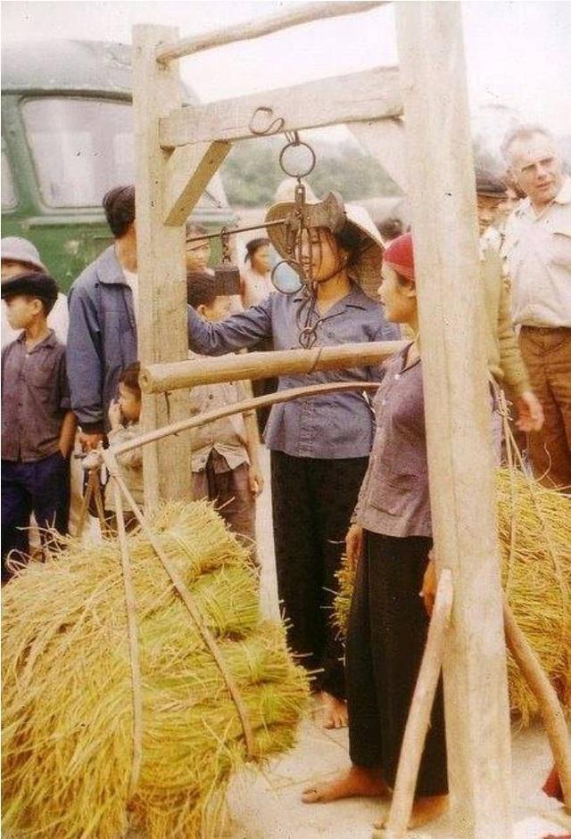 Người dân cân lúa để nộp cho hợp tác xã.