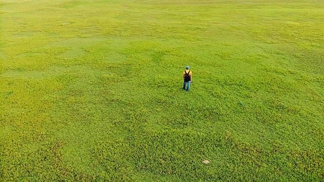 Những bãi bồi vàng óng trong mùa nước cạn ở hồ Phú Ninh
