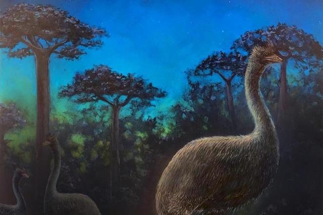 Chim voi là loài ăn đêm và bị mù - 1