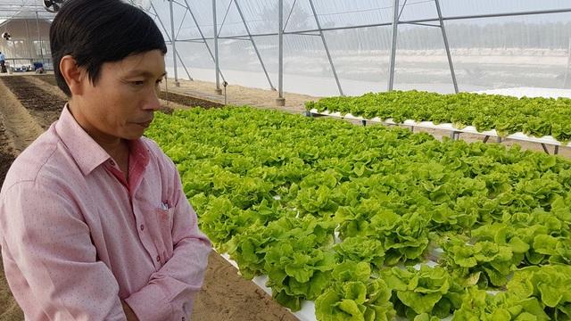 Ông Phan Đức Tư bên cạnh vườn rau xà lách trồng thủy canh gần 1 tháng tuổi