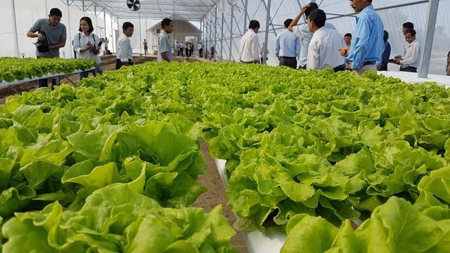 Các giám đốc HTX trên địa bàn đến tham quan, học hỏi mô hình nông nghiệp công nghệ cao của ông