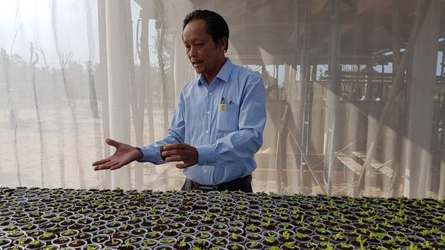 Các bộ hướng dẫn kỹ thuật trồng rau sạch