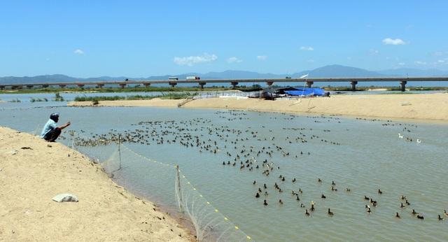 Nuôi gia cầm trên sông Ba cũng tiềm ẩn nguy cơ lây lan dịch cúm A/H5N6