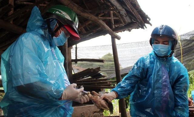 Tỉnh Phú Yên tiêm hơn 180.000 liều vắc-xin để khống chế dịch cúm A/H5N6