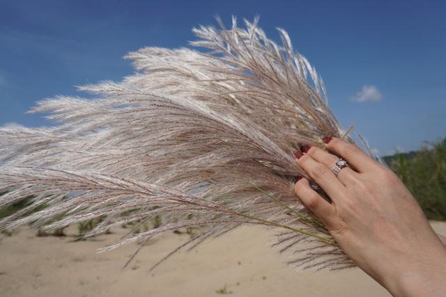 Màu trắng tinh khôi của hoa cỏ lau