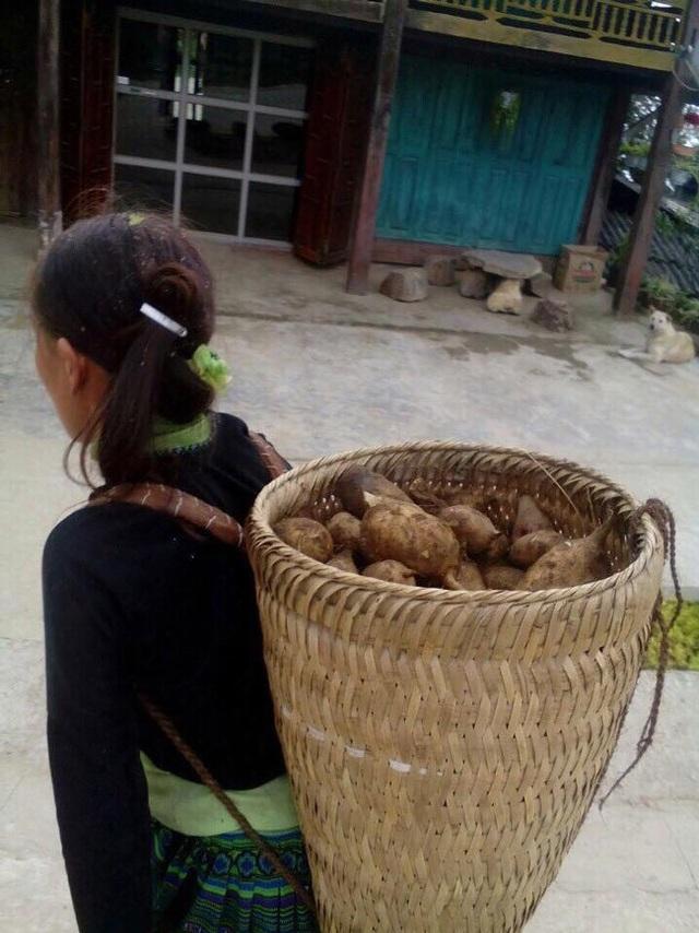 Người dân gùi Sâm khoai xuống chợ bán.