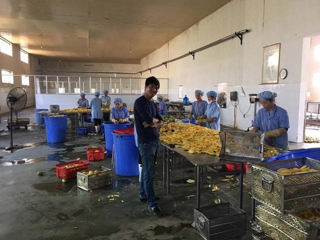 Một xưởng sơ chế, sấy khô loại dược liệu này ở Lào Cai để làm trà giải độc Trường Sinh Thang