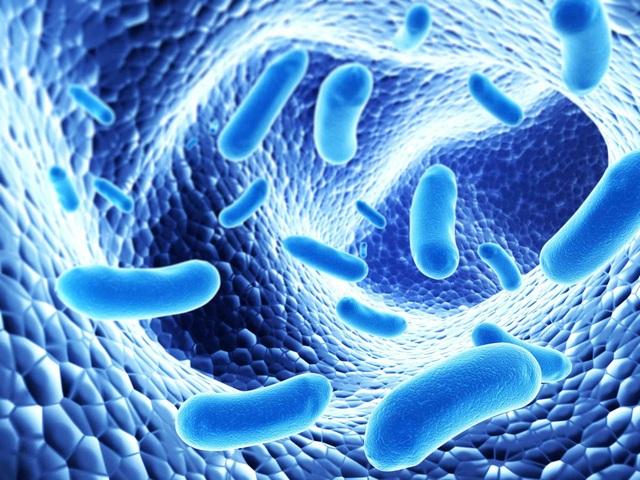 Lợi khuẩn Bifido giúp người bệnh chấm dứt tình trạng tái đi tái lại