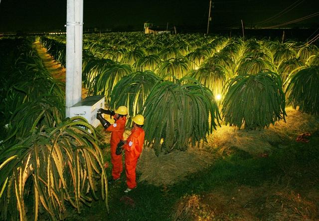 Đảm bảo cấp điện cho các vùng trồng thanh long tại Bình Thuận, Tiền Giang