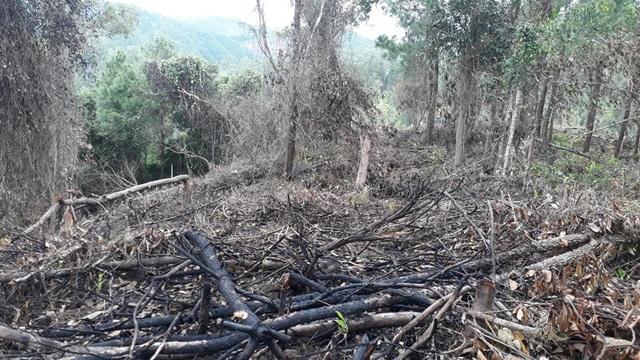 Các thân cây to được gom lại đốt.