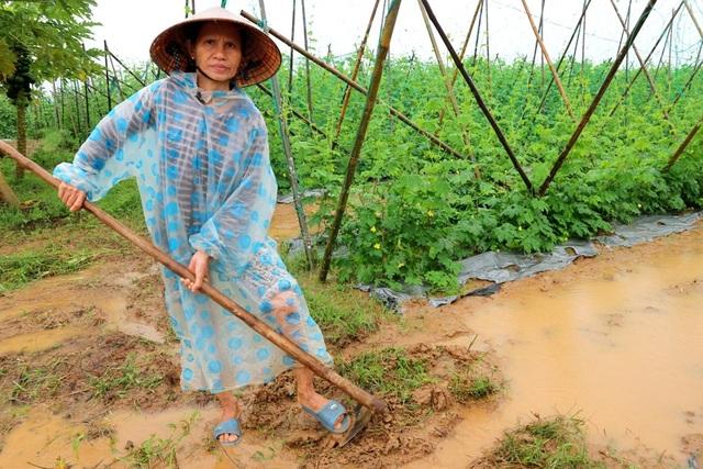 Người dân phải liên tục canh chừng ruộng rau quả nhà mình để tiêu nước