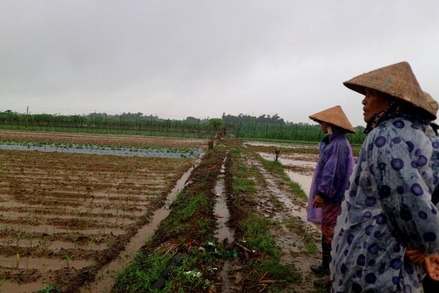 """Người dân thấp thỏm, lo lắng với """"số phận"""" của ruộng rau gia đình trong khi trời liên tục đổ mưa"""