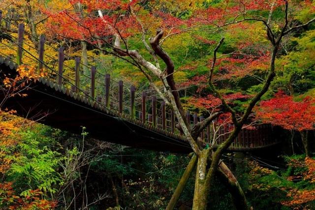 Những địa điểm ngắm lá vàng lá đỏ nổi tiếng nhất nước Nhật - 4