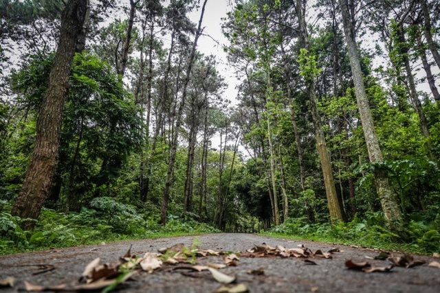 Trường ĐH Lâm Nghiệp có khu rừng thực nghiệm có diện tích hơn 100 ha và rừng môi sinh gần 400 ha.