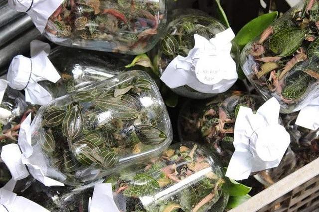 Sau khi các đầu mối thu gom về, dùng những hộp nhựa đóng gói chờ thương lái Trung Quốc sang thu mua.