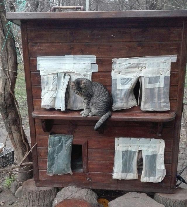 Căn nhà dành cho những chú mèo hoang với chăn sưởi ấm và đầy ắp đồ ăn.