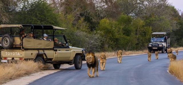 Công viên quốc gia Kruger mở cửa đón khách du lịch kể từ năm 1926