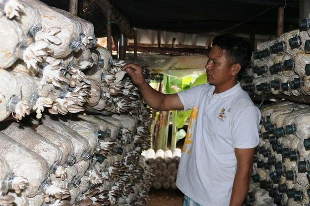 Anh Hồ Xuân Phước hiện đang có mô hình trồng nấm mang lại hiệu quả kinh tế cao.