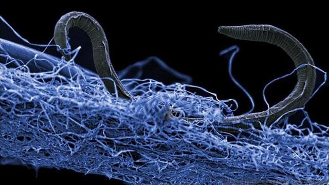 """Hàng loạt vi khuẩn """"thây ma"""" đang ẩn nấp sâu dưới vỏ Trái Đất - Ảnh 1."""