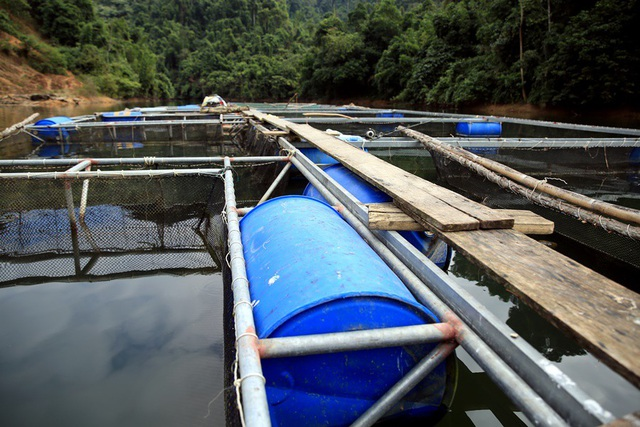 Những chiếc lồng cá chi chít trên long hồ thủy điện Hủa Na, giải quyết được việc làm cho người dân và cho thu nhập ổn đinh.