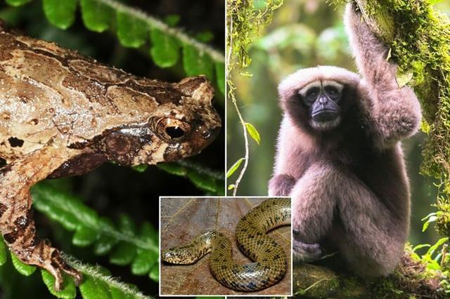 Phát hiện thêm hơn 150 loài mới ở tiểu vùng sông Mekong mở rộng - Ảnh 1.