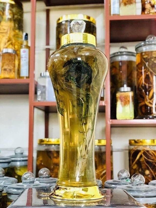 Ngoài việc pha nước uống như trà, hiện tại đây là mặt hàng được giới nhà giàu săn lùng để về ngâm rượu.