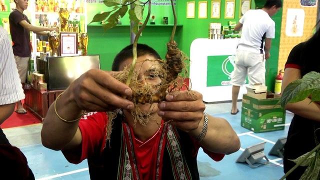 Sâm Ngọc Linh được bày bán ở phiên chợ sâm