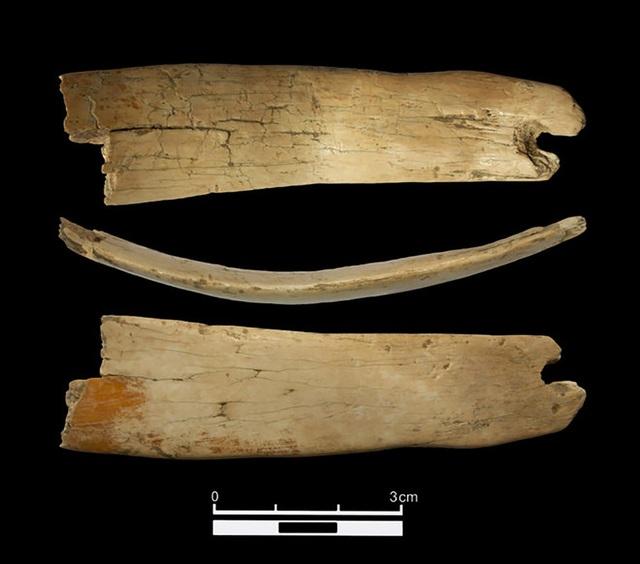 Phát hiện vương miện kì lạ 50.000 năm tuổi ở Siberia - Ảnh 1.