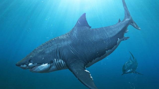 """Sự biến mất bí ẩn của """"siêu cá mập"""" Megalodon đã có câu trả lời? - Ảnh 1."""