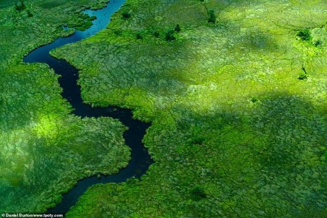 Bức ảnh chụp từ trên cao ghi lại cảnh đẹp của khu bảo tồn Moremi tại vùng đồng bằng Okavango, Botswana. Ảnh: Daniel Burton.