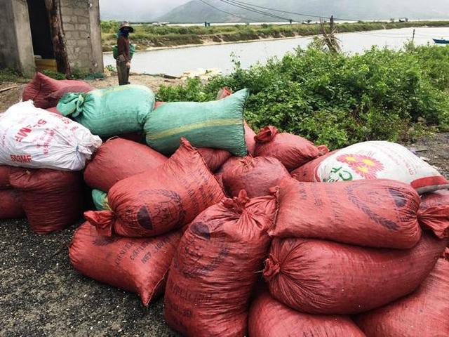Các thương lái thu gom vẹm để chuẩn bị xuất bán cho các cơ sở nuôi tôm