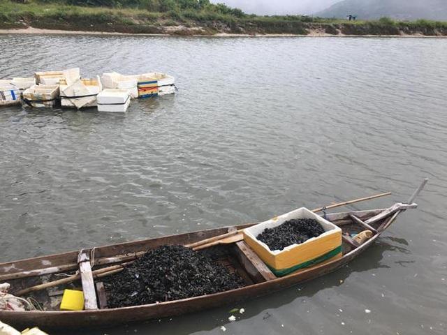Vẹm sau khi qua khâu rửa sạch, được chuyển từ biển vào bờ