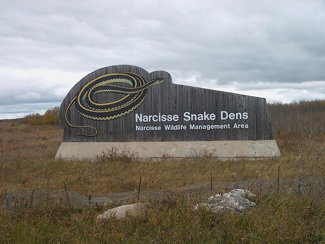 Địa điểm này không thích hợp với người yếu tim hoặc sợ loài rắn